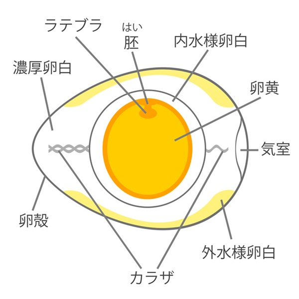 卵の仕組み